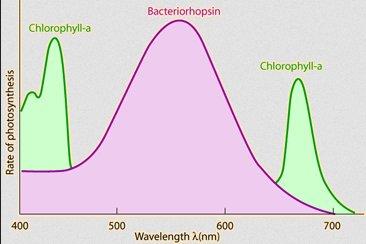 http://hyperphysics.phy-astr.gsu.edu/hbase/Biology/imgbio/plantblack.gif